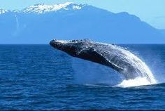Another dream of mine - whale watching in Alaska...