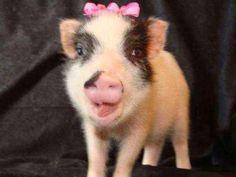 25 photos de bébés cochons trop mignons qui vont vous réconcilier avec ces animaux