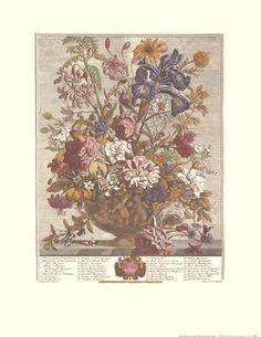 Twelve Months of Flowers, 1730/June