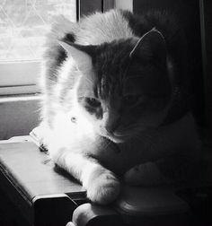 #blackandwhite #bianconero #blancetnoir  #gato #cat #chat Donatello.