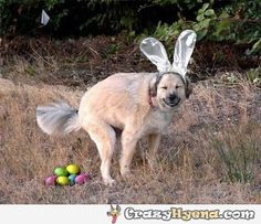 Funny Easter dog - Funny Picture - This is so not right, but funny! Funny Easter Pictures, Funny Animal Pictures, Funny Animals, Adorable Animals, Crazy Animals, Happy Animals, Best Dog Breeds, Best Dogs, Funny Dogs