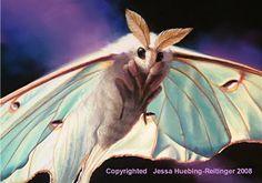 Luna Moth Painting-A Pastel Study Beautiful Bugs, Beautiful Butterflies, Amazing Nature, Cool Insects, Bugs And Insects, Beautiful Creatures, Animals Beautiful, Cute Animals, Cute Moth