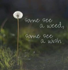 And some wish they didn't have weeds!!