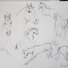 Wild Horses Sketchings by Carrie Kohan Wild Horses, Carrie, Carry On, Artwork, Inspiration, Biblical Inspiration, Work Of Art, Hand Luggage, Auguste Rodin Artwork
