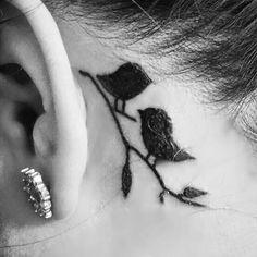 small-love-birds-on-back-of-an-ear.jpg 500×500 pixel