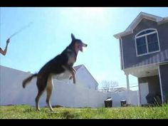 You have to watch this video!  It will blow your mind.  This Dog is incredible!!