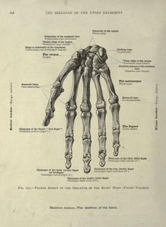 An atlas of human anatomy for students and physicians, - Biodiversity Heritage Library