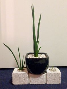 Shaped Plant pots in piece of Hebel Stone I carved