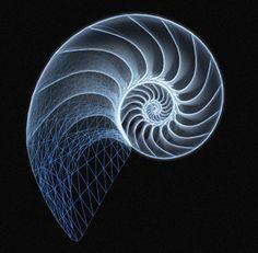 chambered nautilus - Google Search