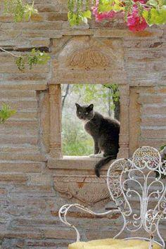 Wall & kitty
