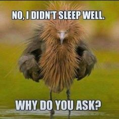 Funny Animal Jokes, Funny Animal Pictures, Cute Funny Animals, Animal Memes, Funny Cute, Funny Jokes, Funny Pix, Funny Relatable Memes, Funny Texts