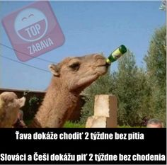 Funny Memes, Jokes, Camel, Lol, Animals, Image, Doggies, Funny Stuff, Happiness