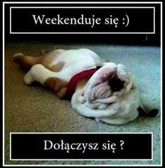Polish, Humor, Sweet, Funny, Dogs, Animals, Candy, Vitreous Enamel, Cheer