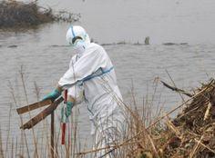 Japón: Detectan niveles de radioactividad en aguas subterráneas de Fukushima   + VERDE