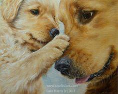 Golden Retriever Puppy & Mama - yes as you can tell by all my pins of golden retrievers im OBSESSED.