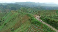 Bukit Panyaweuyan Majalengka Jawa Barat