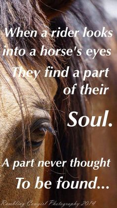 When a rider looks into a #horse's eyes they find a part of their soul. A part never thought to be found. #quote #inspiration