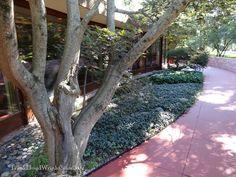 Laurent House patio