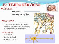 Resultado de imagen de tejido nervioso