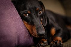 Couch Potato by Steven Green Photography on Flickr.