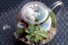 DIY : La théière terrarium