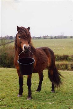 OMG - if Terra's feed bucket had a handle she would totally be doing this! Plus probably stamping her feet!