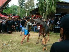 Tana Toraja, Indonesia http://www.imperatortravel.com/2012/06/tana-toraja-where-the-living-live-for-their-dead-and-the-dead-live-among-the-living.html