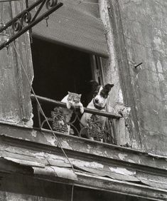 Dog and Cat in Paris. Photograph by Annick Gérardin. pic.twitter.com/hzwdCj1bOX