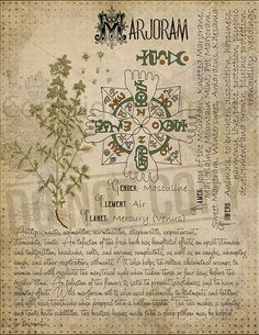 modern witch Herbal Grimoire BOS Sheets vol If you want to save ink, please contact me after purchase. I have files without a antique background as well. Magic plant knowledge has a l Magic Herbs, Herbal Magic, Magick Spells, Witchcraft, Grimoire Book, Witch Herbs, Modern Witch, Practical Magic, Book Of Shadows