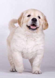 Mary es una cachorrita Golden Retriever que se ha alimentado con Arion desde el destete. Hija de campeones de belleza y con sangre británica por la línea paterna, su destino parecía ser la competición en exposiciones de belleza, sin embargo fue adoptada por una maravillosa familia donde vive feliz jugando y corriendo todo el día.