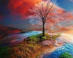 Beautiful tree and scenery Beautiful World, Beautiful Images, Beautiful Things, Beautiful Sunset, Landscape Photography, Nature Photography, Image Nature, Nature Scenes, Nature Pictures