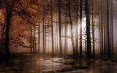 Terre/Nature Forêt  Fond d'écran