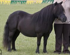 When I was in 6th grade, I fell in love with a black Shetland pony at summer camp. Her name was Shadow, and I thought she was the most amazing thing ever.