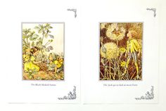 Two Cicely Mary Barker Prints, Yellow Flower Fairies Pictures, Black Medick Fairies, Jack-go-to-bed-at-noon Fairy, Nursery picture