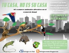 Biología con Sam : Tu casa, no es su casa. Teaching Themes, Learning Resources, World Languages, Conservation, Recycling, Environment, Home, Animales, Science