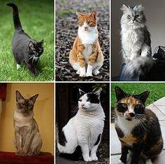 La mission des CHAT auprès des humains : Les chats ont cette aptitude très particulière de pouvoir absorber les énergies négatives du foyer et des êtres qui les entourent. Il n'y a pas qu'eux qui ont cette aptitude, les chiens et d'autres animaux, le font aussi. Saviez-vous que les chats ont une mission dans notre vie ? ...