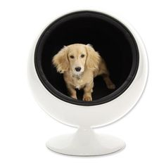 POOCHI & TOUTOU- Pet Apparels and Accessories- Modern Pet Ball House - Beds / Houses