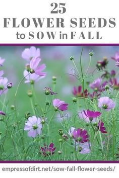 Flower Seeds to Sow in Fall Flower Seeds to Sow in Fall Empress of Dirt empressofdirt Fall Garden Ideas Give these flower seeds a head nbsp hellip videos wohnzimmer Flowers Perennials, Fall Flowers, Flower Garden, Autumn Garden, Flower Seeds, Perennials, Plants, Planting Flowers, Fall Plants
