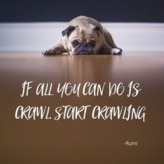 """'If all you can do is crawl, Start crawling"""" ~Rumi   From The Best Unexpected Community"""