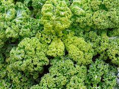 Green cabbage, photography, instant  downloadable, JPEG file, instant art, vegetables printable, green  food, backdrop, veggie decor, kale
