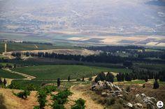 LEBANON, WEST BEKAA, KEFRAYA VINEYARDS, NICE