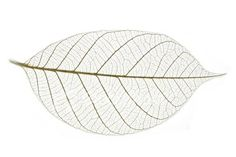 Google Image Result for http://i.istockimg.com/file_thumbview_approve/1111972/2/stock-photo-1111972-leaf-skeleton-2.jpg
