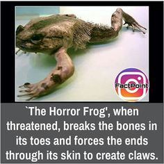 Not touchin a frog today! The More You Know, Good To Know, Spooky Scary, Creepy, Life Hacks, Wtf Fun Facts, Crazy Facts, Wtf Moments, Mind Blowing Facts
