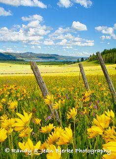 Landscape in Island Park, Idaho, USA