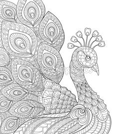 Adult antistress coloring page. Black and white hand drawn doodle for coloring book Vektor: Peacock. Adult antistress coloring page. Black and white hand drawn doodle for coloring book Peacock Coloring Pages, Animal Coloring Pages, Mandala Coloring, Coloring Book Pages, Peacock Drawing, Peacock Art, Peacock Vector, Peacock Pattern, Peacock Colors