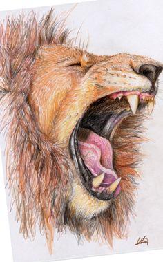 Lion sketch <3