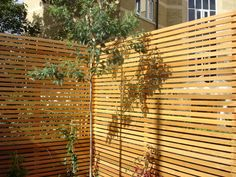 Cedar privacy screen
