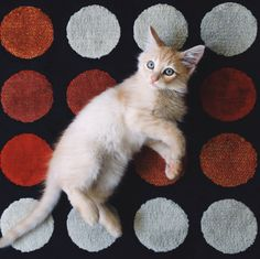 Gatinho filhote