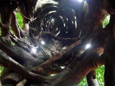 https://dornsife.usc.edu/assets/sites/1/imgs/overseas/Australia/The_inside_of_a_strangler_fig_tree.jpg