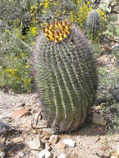 Arizona-Sonora Desert Museum, Tucson, Arizona - Travel Photos by Galen R Frysinger, Sheboygan, Wisconsin